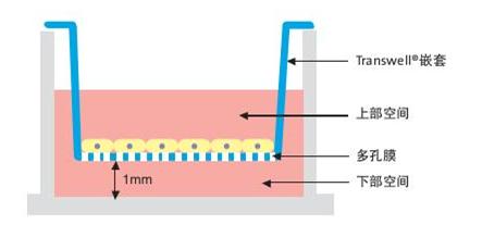 Caco-2细胞渗透性实验