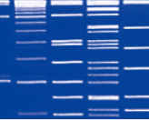 Direct-load™ 50 bp DNA ladder