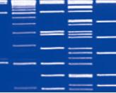 Direct-load™ λ DNA/EcoR I + Hind III Marker