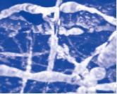StarRNA Tissue Stabilizer