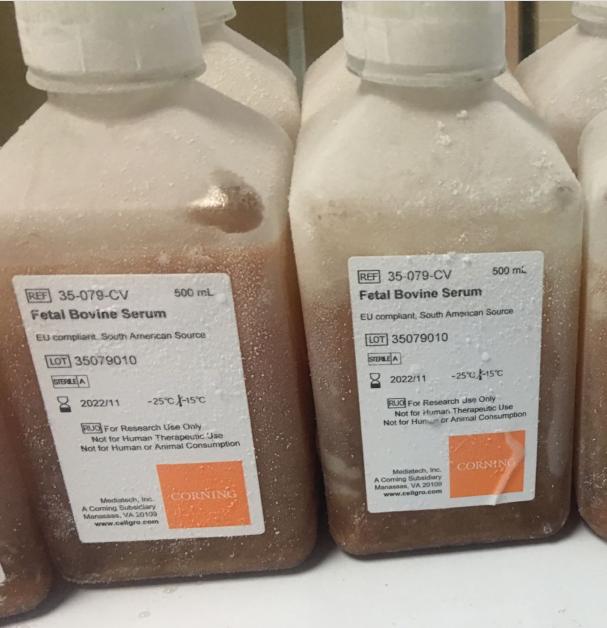 Corning胎牛血清 Fetal Bovine Serum(FBS)