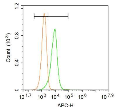 Phospho-Smad3 (Ser423 + Ser425)磷酸化细胞信号转导分子SMAD3抗体