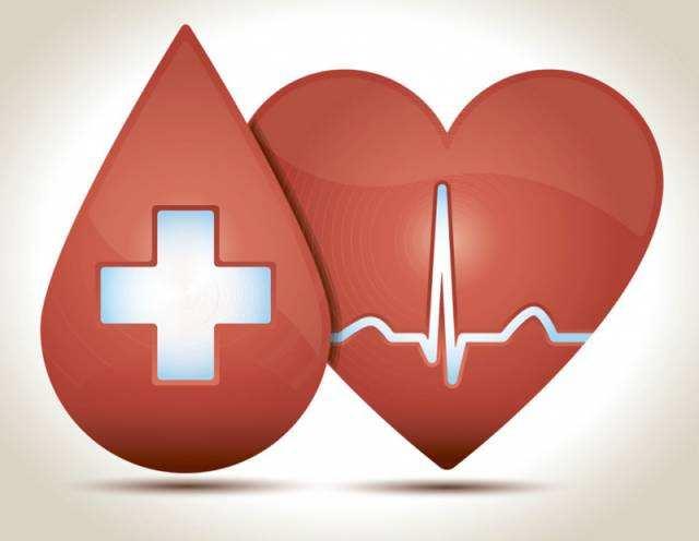 心血管药物药效模型