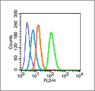 phospho-Smad2 (Ser250)磷酸化细胞信号转导分子SMAD2抗体
