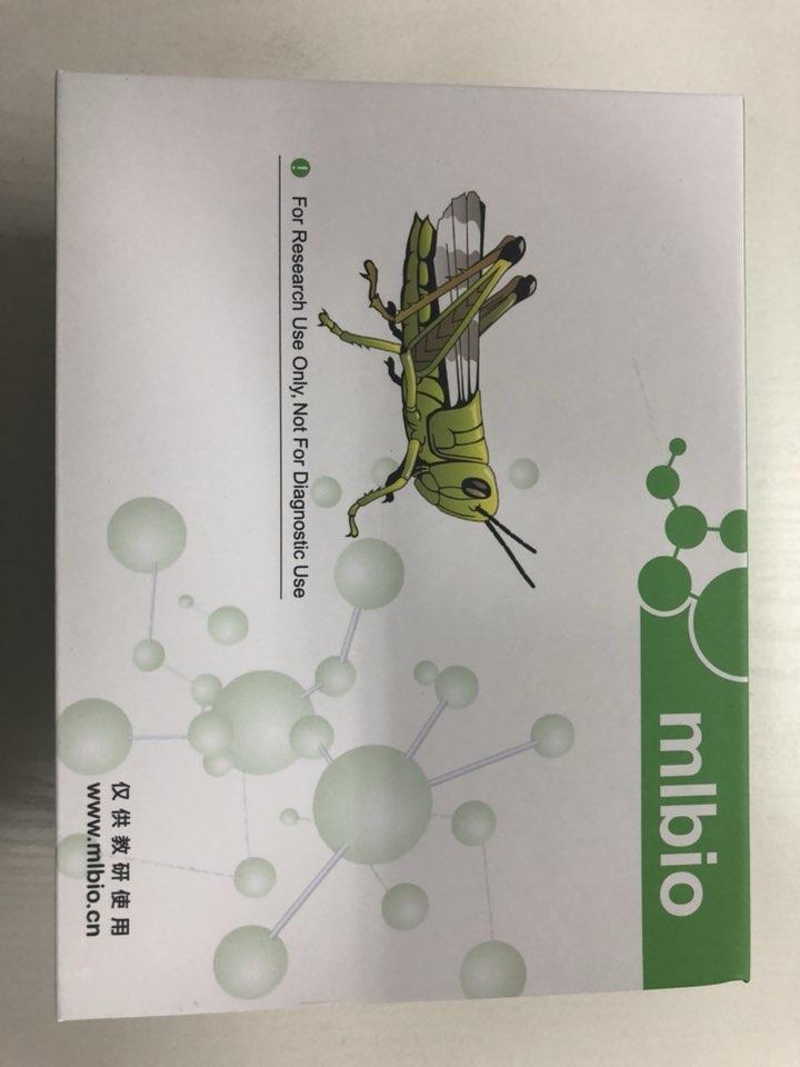 牛脱氧核糖核酸酶I型(DNASEI)ELISA试剂盒