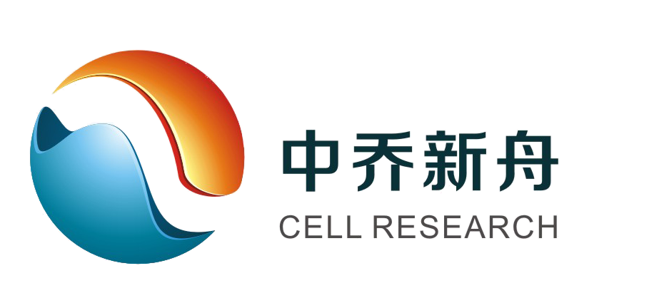 小鼠腹脊髓神经细胞MN-vsc