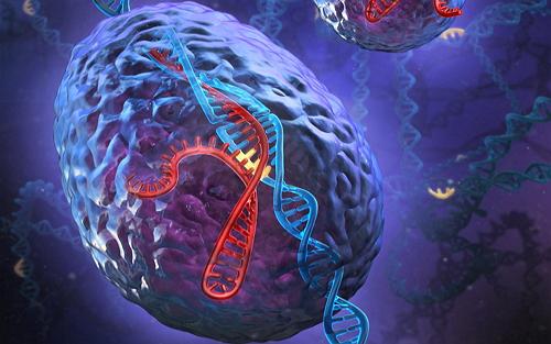 细胞系基因编辑服务