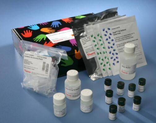 叶绿体核糖体提取试剂盒-非酶法