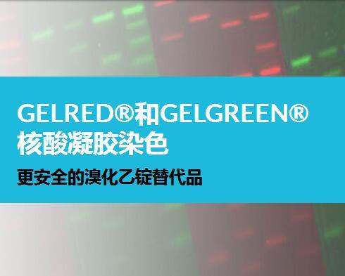 Biotium  GelRed®核酸凝胶染色剂, 10,000X 水 41003