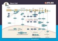 Stem Cell.jpg