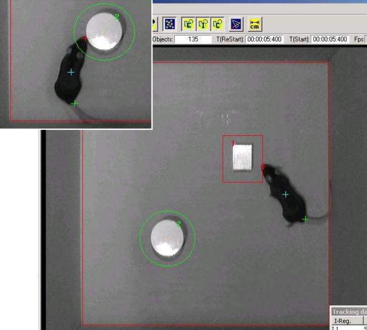 小鼠新物体识别箱系统
