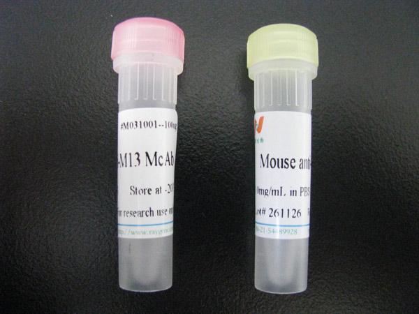 精子尾部结构蛋白抗体