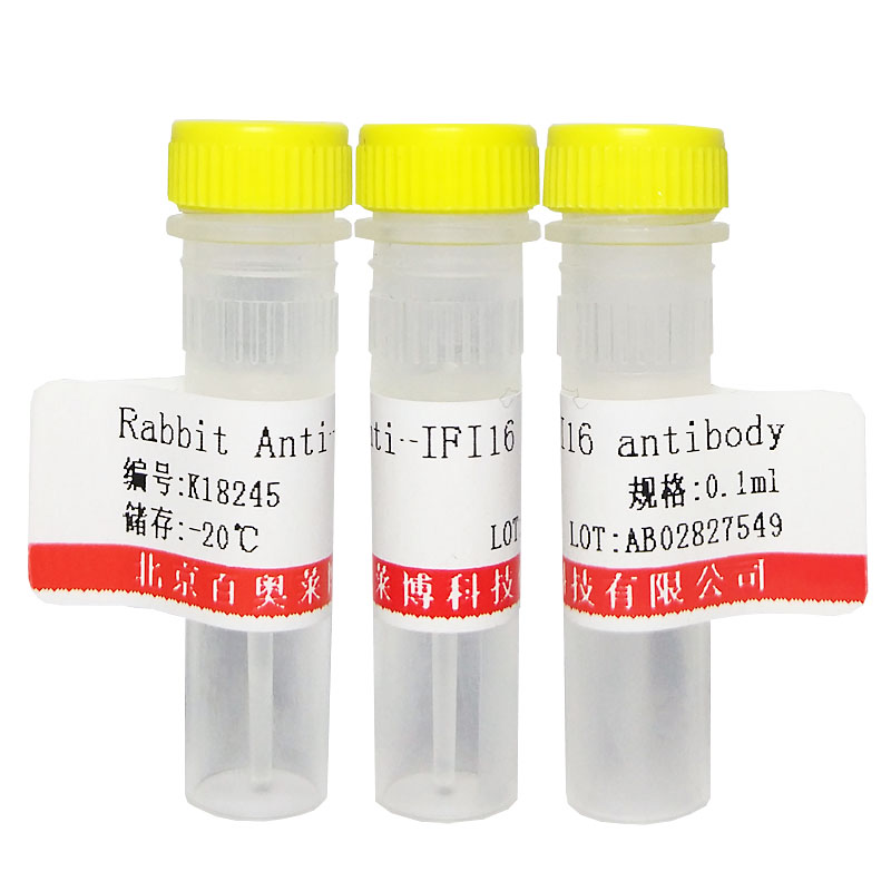 TRANK1蛋白抗体