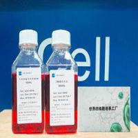 DT40鸡淋巴瘤细胞