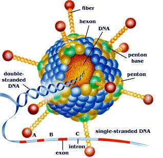 RNAi 腺相关病毒AAV产品