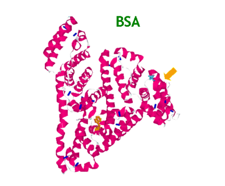 西安瑞禧供应 牛血清白蛋白修饰介孔硅-BSA/MSNs   提供核磁、图谱
