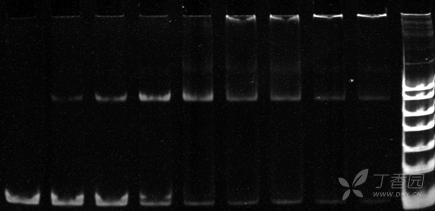 凝胶阻滞实验的原理_豚鼠实验