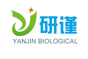 Bcl-2同源结构域蛋白抗体