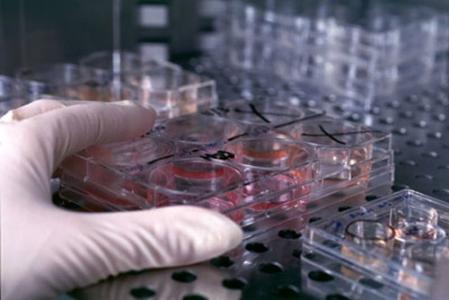 STR鉴定细胞/细胞鉴定/细胞周期检测