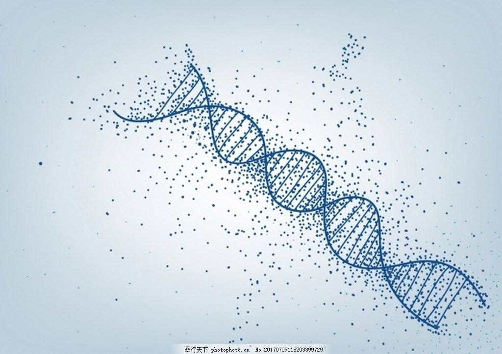 CRISPR/Cas9载体构建