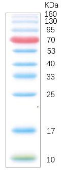 彩色预染蛋白Marker(10-180 kDa)