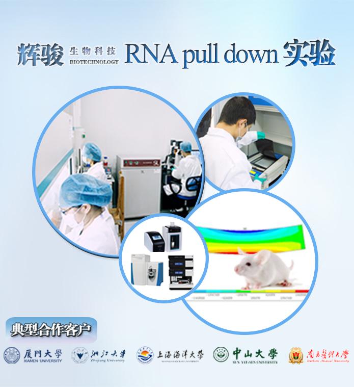 RNA pull down实验