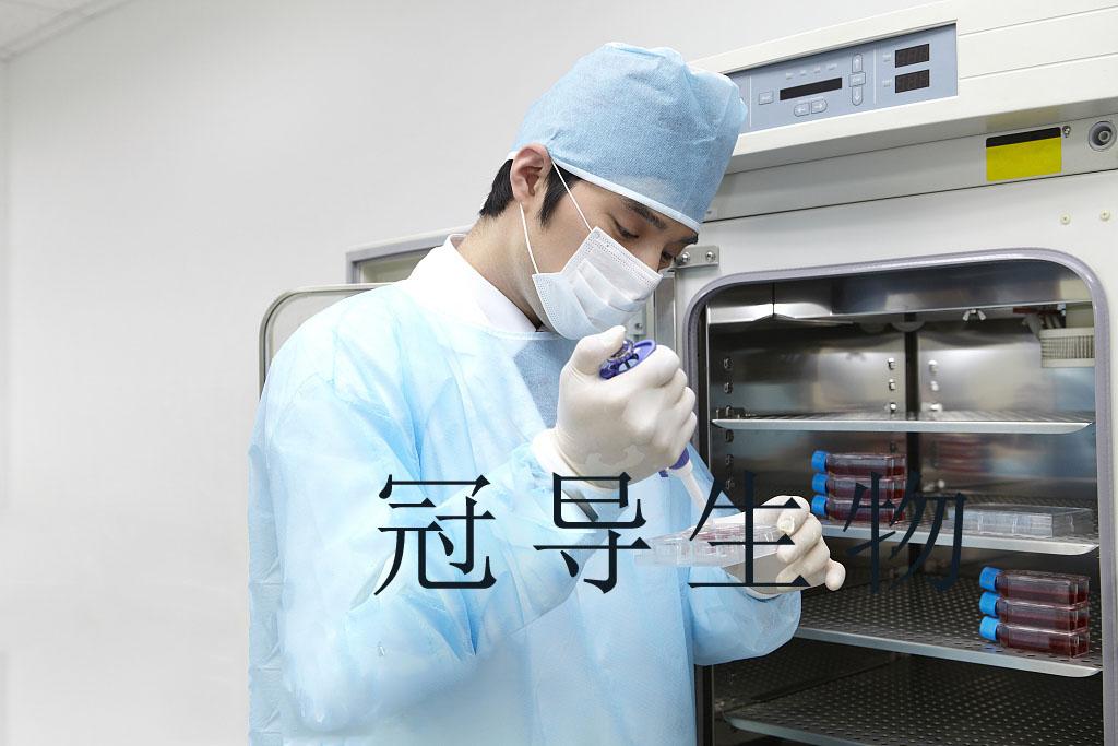 CHO-S中国仓鼠卵巢细胞系 冻存时如何操作会更好