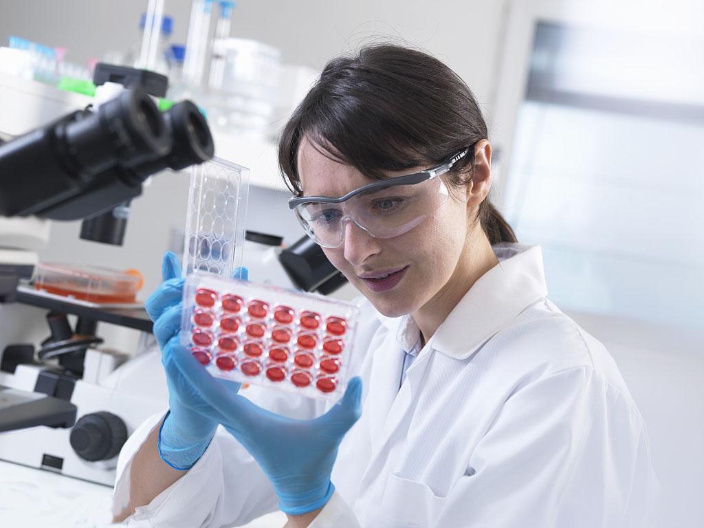SKM-1人骨髓增生异常综合征细胞系 复苏技术更棒