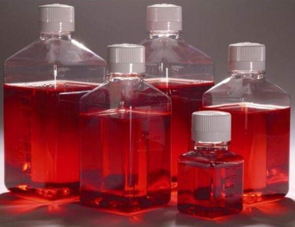 人宫颈癌细胞SiHa