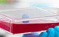 小鼠肝窦内皮细胞/免疫荧光鉴定/赛百慷(iCell)