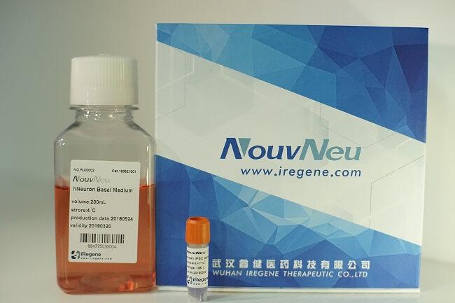 NouvNeu™ 科研级人源神经干细胞(hNSC)细胞株