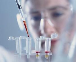 磷酸化精子尾部结构蛋白抗体说明书