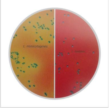 李斯特氏菌显色培养基(改良型)