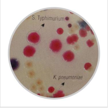 改良沙门氏菌RajHans显色培养基