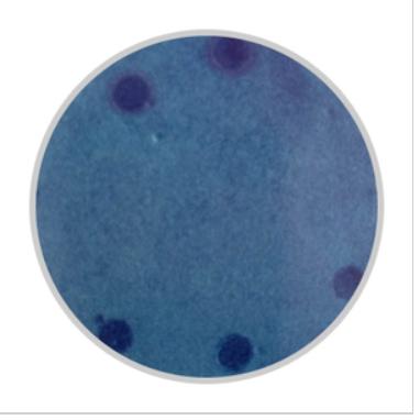 HiDtect DNA酶鉴定纸