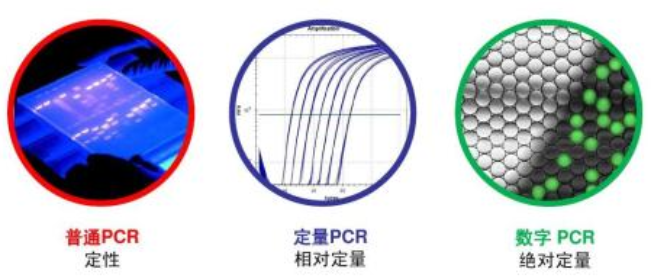 猪繁殖和呼吸综合症病毒qPCR检测试剂盒