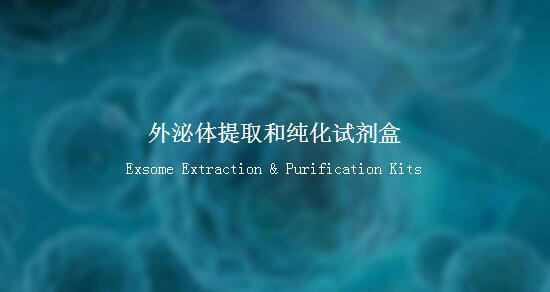外泌体提取和纯化试剂盒(细胞培养上清或尿液)