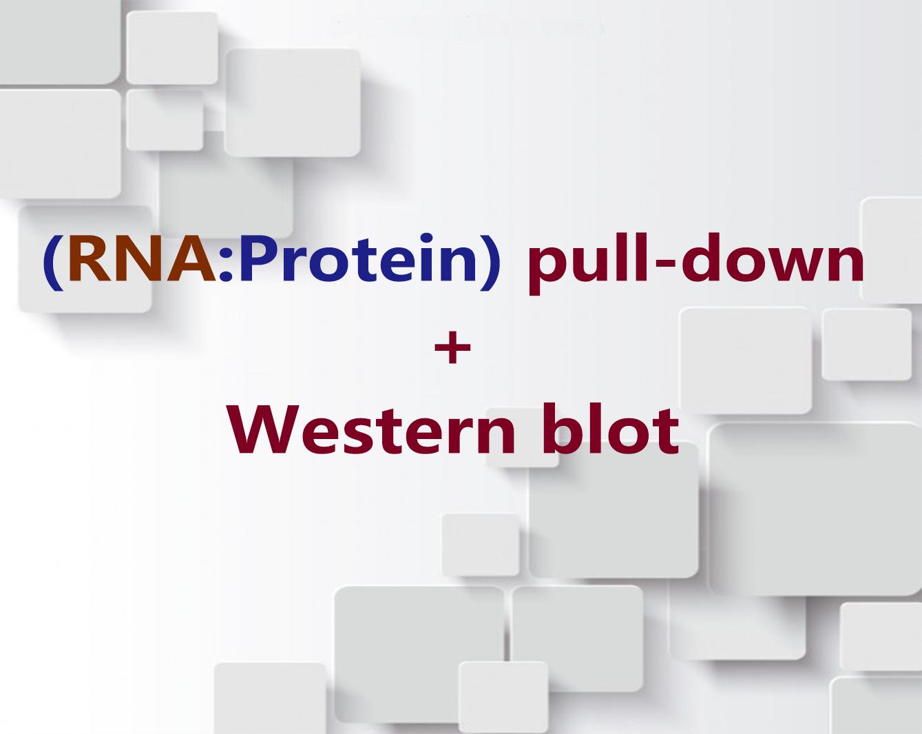 88必发娱乐官网_蛋白质表达纯化技术服务