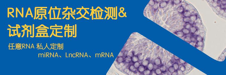 RNA原位杂交