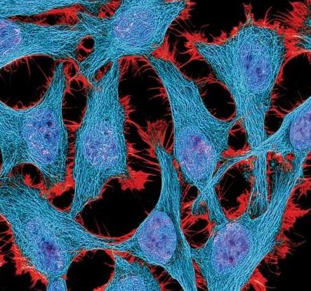 原代细胞分离和培养