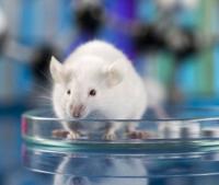 CRISPR-Cas9技术基因敲除服务