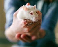常见疾病动物模型