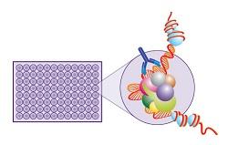 激酶活性检测技术服务