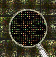 生物信息学分析服务