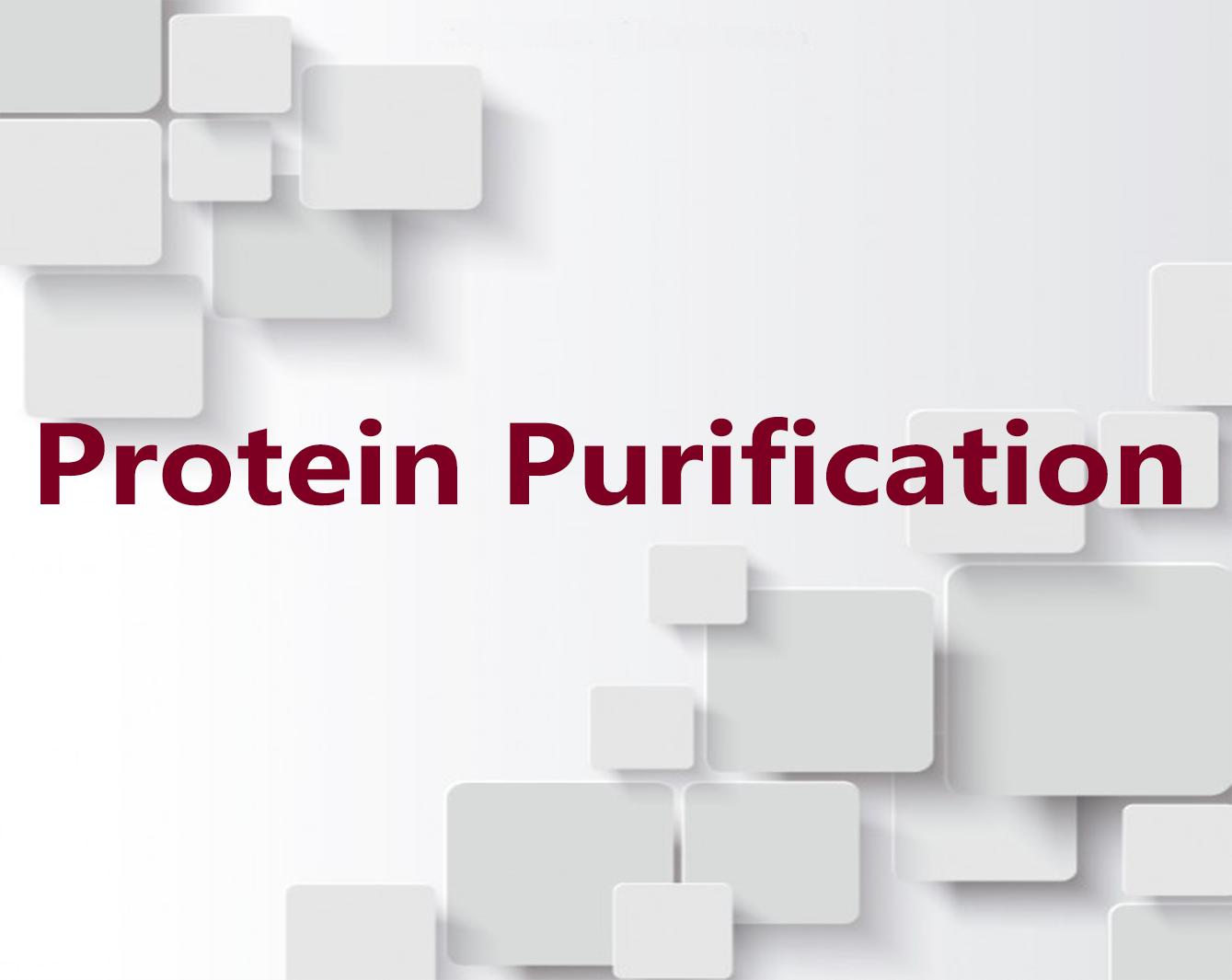 蛋白质表达纯化技术服务