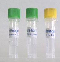 高效转染试剂III代