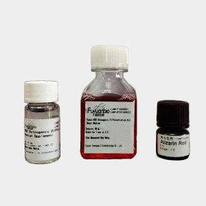 成脂分化培养基,人间充质干细胞成脂诱导试剂盒