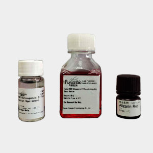 成骨分化培养基,人间充质干细胞成骨诱导试剂盒