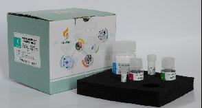 全血DNA提取试剂盒FirePureTM Blood DNA Kit