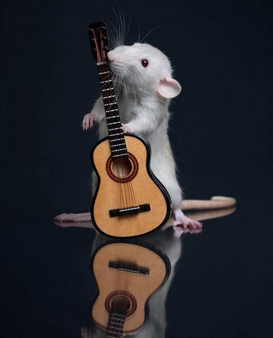 CRISPR/Cas9基因编辑小鼠